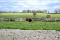 Arrivée à la ferme