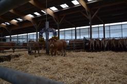 Système de massage pour les vaches
